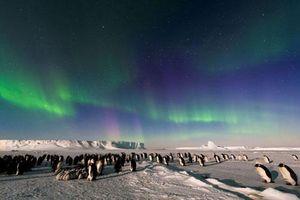 Có thể bạn chưa biết: Top 10 sự thật thú vị về Nam Cực