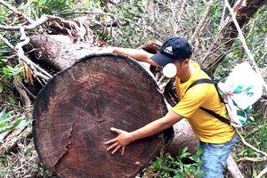 Xem tư dinh quan chức làm mất rừng sở hữu 'kiệt tác' gỗ đồ sộ