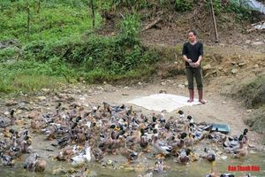 Thanh Hóa: Thanh niên 8X kiếm hàng trăm triệu mỗi năm nhờ nuôi vịt