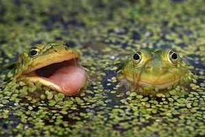 Bài học niềm tin của hai chú ếch và những điều phải suy ngẫm