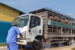 Thêm C.P. Việt Nam và Mavin công bố giá lợn hơi 70.000 đồng/kg từ ngày 1/4