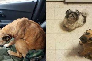 Chó hoang trốn trong xe ô tô của người lạ và cái kết bất ngờ