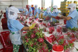 Tín hiệu tích cực từ xuất khẩu nông sản