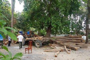 An Giang: Tạm giữ hơn 10 mét khối gỗ 'vô chủ' bỏ ven đường