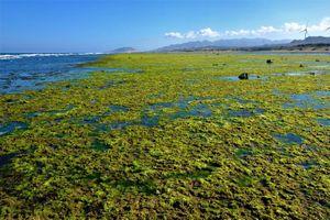 Chiêm ngưỡng bãi rêu xanh tuyệt đẹp ở Ninh Thuận