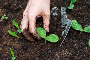 CLIP: Hướng dẫn xử lý đất trước khi trồng rau sạch tại nhà