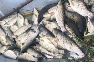 Thanh Hóa: Chưa rõ nguyên nhân gây cá chết bất thường trên Sông Chu