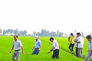 An Giang kiến nghị Thủ tướng cho xuất khẩu gạo đặc thù của tỉnh