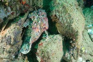 Bầy cá mặt quỷ phô diễn khả năng tàng hình 'thần sầu' dưới đáy đại dương