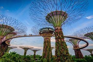 Kỳ quan nhân tạo 'siêu cây' năng lượng mặt trời