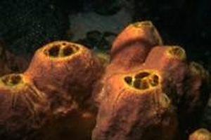Phân tử ở loài bọt biển có tác dụng chữa ung thư