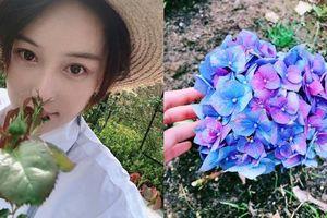 Trương Hinh Dư ở nhà trồng hoa trong lúc nghỉ việc
