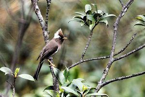 Những loài chim quý hiếm qua ống kính của nhà hoạt động môi trường