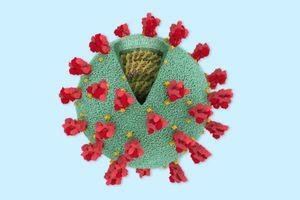 Khía cạnh tích cực khi virus Corona 'tiến hóa'