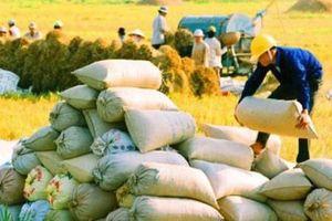 Thủ tướng đồng ý xuất khẩu 400.000 tấn gạo trong tháng 4