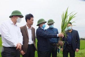 Sẽ có thêm gần 3,5 triệu tấn gạo vụ Đông Xuân ở các tỉnh phía Bắc