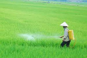 Chủ động phòng trừ sâu bệnh hại lúa