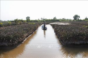 Từ ngày 11-20/5, xâm nhập mặn ở Đồng bằng sông Cửu Long vẫn ở mức cao