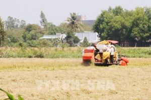 Xu thế xâm nhập mặn ở Đồng bằng sông Cửu Long tuần tới liệu có giảm?
