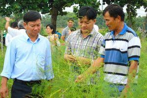 Ninh Thuận: Tập huấn kỹ thuật thâm canh cây măng tây xanh