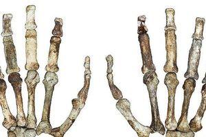 Chấn động: Tìm thấy sinh vật 2 triệu tuổi có bàn tay giống hệt con người