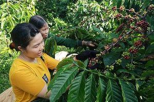 Đắk Nông: Tạo điều kiện để doanh nghiệp tận dụng hiệu quả các FTA