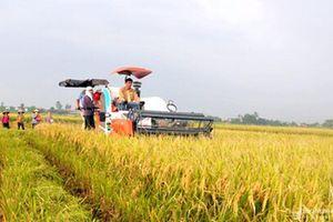 Đề xuất HĐND tỉnh ban hành chính sách hỗ trợ sản xuất nông nghiệp quy mô lớn