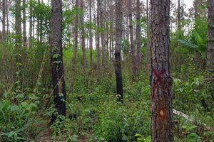 Lâm Đồng: Điều tra vụ người chết trong rừng nghi bị bắn nhầm