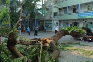 Bộ GD&ĐT yêu cầu các nhà trường khẩn trương kiểm tra, cắt tỉa cây xanh trong trường học