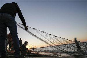 1 chủ tàu cá ở Quảng Ngãi bị phạt hơn 900 triệu đồng