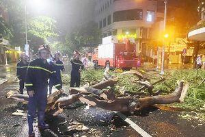 Đà Nẵng: Liên tiếp cháy nhà, đổ cây trong một ngày, báo động ẩn họa mùa nắng nóng