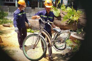 Sau vụ cây đổ khiến học sinh chết, các tỉnh yêu cầu rà soát cây xanh