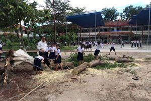 Thêm cây phượng bất ngờ bật gốc, trường tiểu học hú vía
