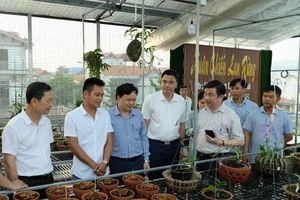 Vùng hoa Mê Linh phát triển mô hình trồng lan quý hiếm
