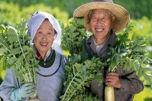 Người Nhật làm thế nào để hạnh phúc?