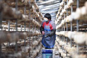 Trung Quốc hoãn thời hạn nộp thuế cho các doanh nghiệp nhỏ