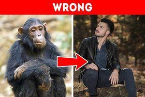 Những quan điểm sai lầm về động vật mà chúng ta vẫn tin sái cổ