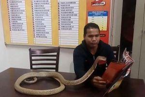 Nam quân nhân dạy rắn hổ mang chúa đọc sách, chơi bóng đá