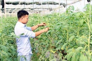Bạc Liêu chú trọng xúc tiến thương mại nông sản