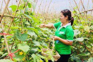Đẩy mạnh phát triển rau màu vụ mùa