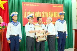 Khánh Hòa: Cấp Bằng công nhận 4 cây di sản Việt Nam ở Trường Sa