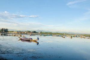 Thừa Thiên – Huế: Thành lập khu bảo tồn thiên nhiên đất ngập ngước Tam Giang – Cầu Hai