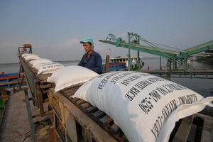 Giá gạo xuất khẩu tăng cao nhất trong nhiều năm