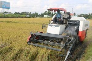 Chủ động thu hoạch, bảo vệ lúa trước diễn biến bất lợi của thời tiết