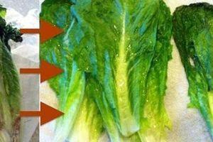 Học người Nhật cách 'hô biến' rau củ héo trở nên tươi rói chỉ trong 'tích tắc'