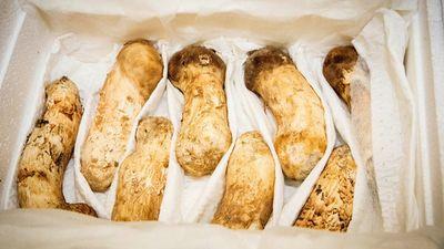 2 tấn nấm thông ông Kim tặng Hàn Quốc trị giá tới 1,34 triệu USD