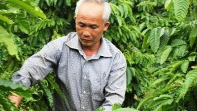 Làm giàu ở nông thôn: Trồng 12 ha cà phê, hồ tiêu, chưa bao giờ lỗ