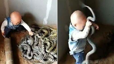 Gai ốc nổi khắp người khi xem cảnh cậu bé tập đi chơi với rắn