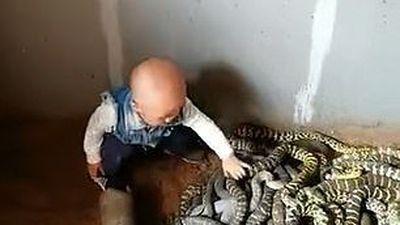 Nhóc tì gan lì một mình đùa giỡn với cả bầy rắn