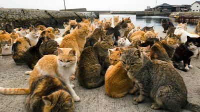 Bí mật về Đảo Mèo ở Nhật Bản